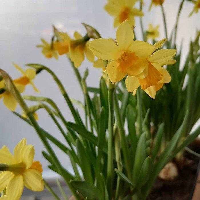 Rauhallista pääsiäistä! 💛🐣 #meidänvsp